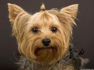 Набор резиночек для собак, 200 шт                                                                                         (Наименование: Набор резинок для собак, 200 шт  )